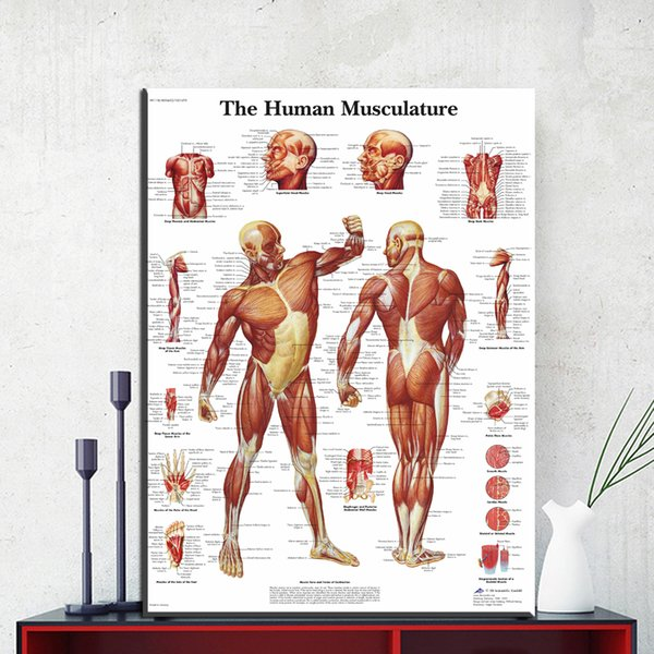 1 Panel Human Body Anatomy Canvas Art Print Painting Poster Wall Pictures For Living Room Home Decorative Hospital Decor No Frame