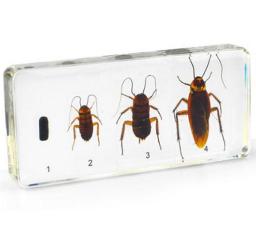 Life Cycle of Cockroach Specimen Resin Embedded Cockroach Biology Specimen Transparent Mouse Paperweight New Kid Learning&Teaching Appliance