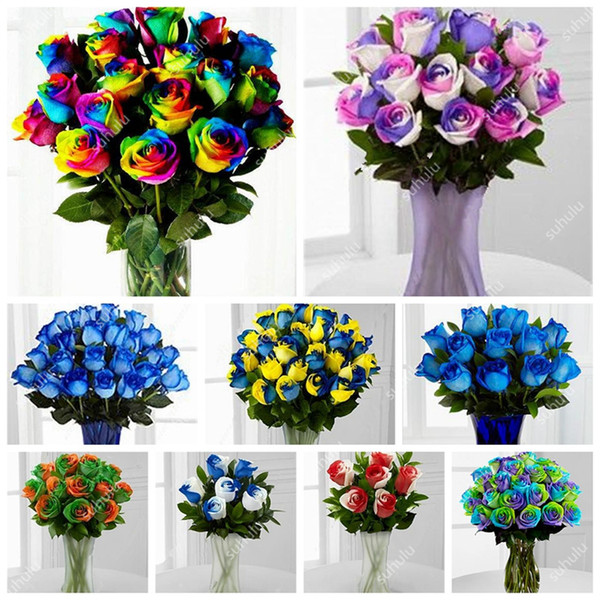 200 Pcs/Bag Rainbow Rose Flower Seeds Mixed With White Edge,Two-Color Bonsai Flower Seeds For Home & Garden Plant Outdoor Garden Flowe