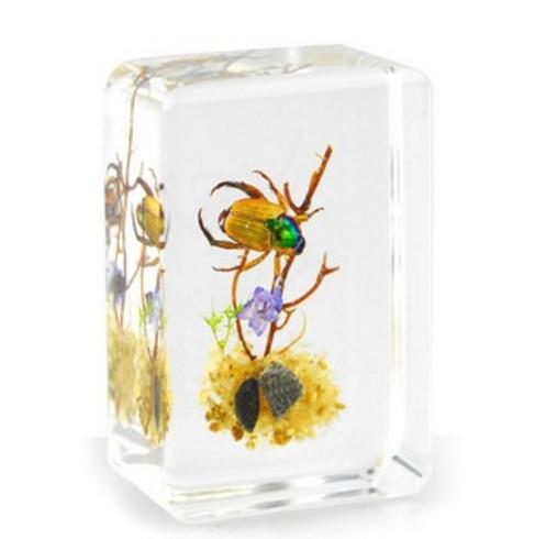 top popular Golden Cockchafer Specimen Acrylic Resin Embedded Cockchafer Transparent Mouse Paperweight Kids New Biology Science Teaching&Learning Kits 2021