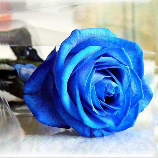 30 pcs / sac Rare Escalade Rose graines coloré rose graines spécial fleur graines Polyantha rose bonsaï plante pour jardin de la maison