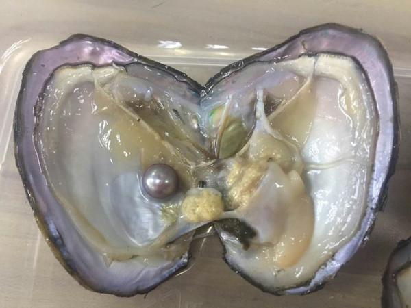 top popular Free Shipping Oysters With 3A 8.5-9.5mm Edison Pearl Inside,Natural Colors Edison Pearl Oysters,Mini Monsters,Monster Oysters 2019