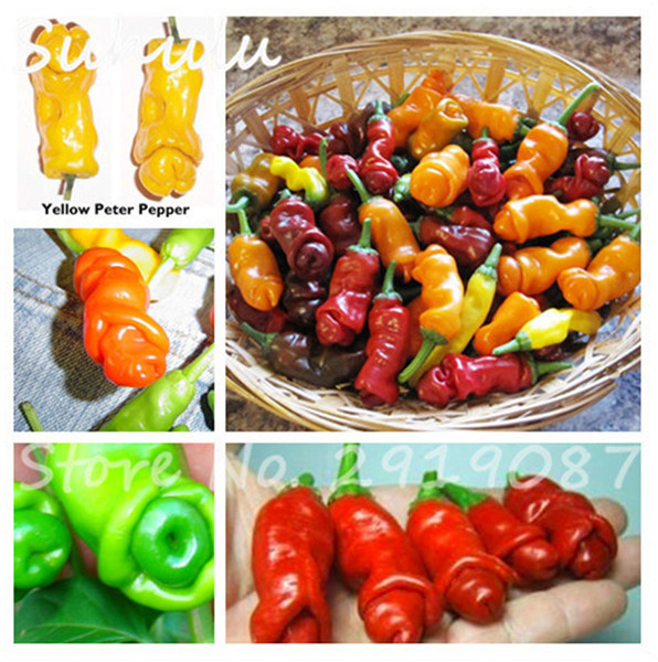 200 Pcs Penis Chili Red Hot Peter Pepper Seeds The World Hottest Tasty Big Delicious Vegetables Seeds Most Funny Peppers Bonsai Plant Seeds