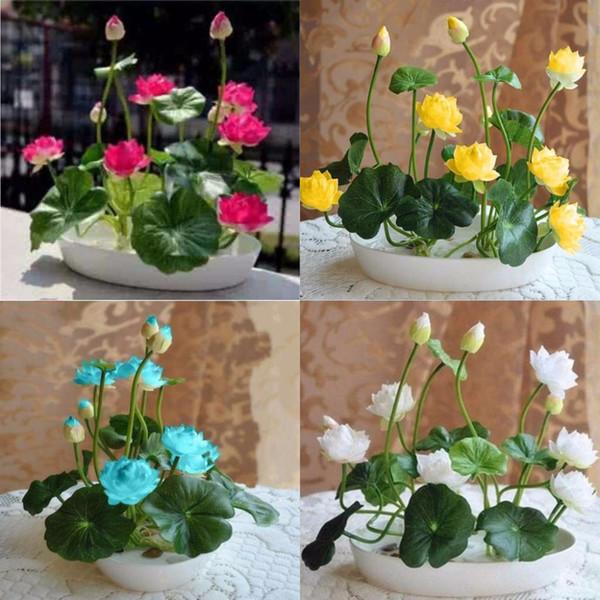 10 pcs / pack Tazón de Semilla de Loto Semillas Hidropónicas Plantas Acuáticas Semillas de Flores Olla de Agua Semillas de Lirio Bonsai Jardín