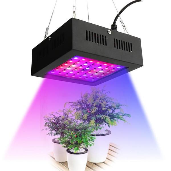 Nueva 80W LED Grow Light 42leds IP66 Sistema Hidropónico de interior Planta crece la luz Para Invernadero Floración y Crecimiento