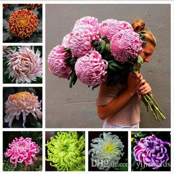 Chinese mum Seeds Rare Perennial Flower Seeds Indoor Bonsai Plants Chrysanthemum plant For Home & Garden mixed color 50pcs/bag