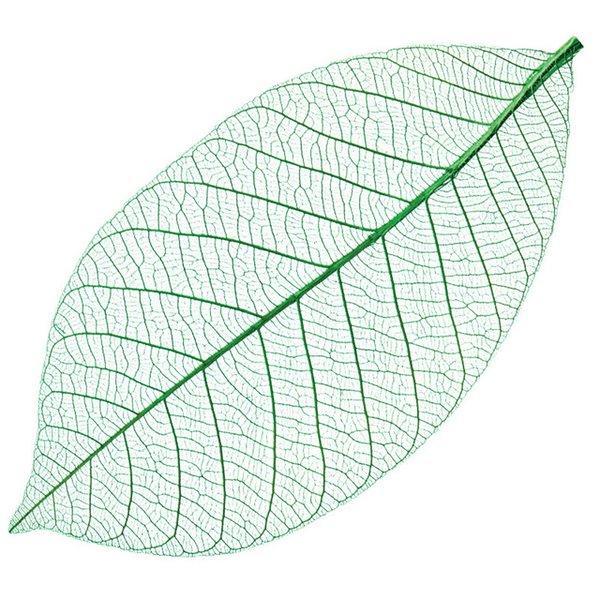Yulan leaf vein