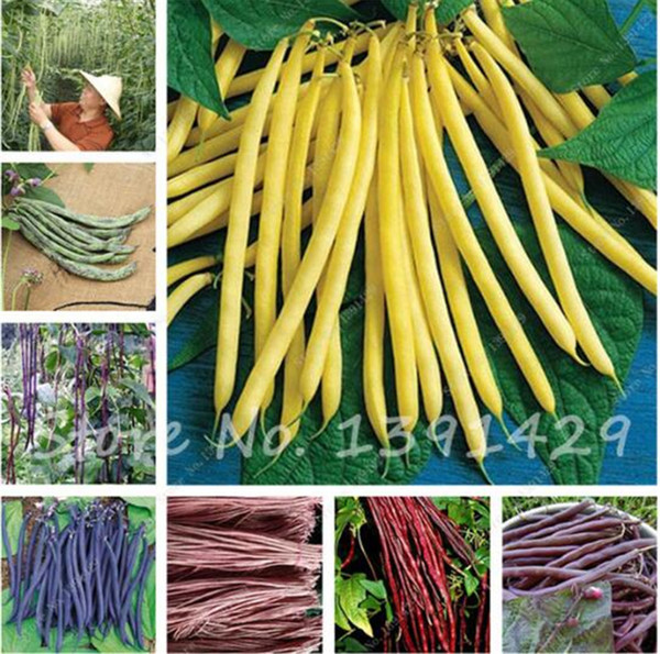 Free Shipping 10 pcs/bag Multi Color Bean Seeds Long Bean Seeds, Healthy Vegetable Seeds,Natural growth For Home Garden