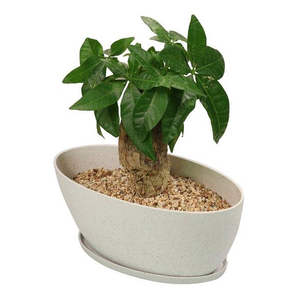MUZHI Long Oval Modern Minimalist Succulent Bonsai Planter Pots with Tray, Biodegradable Bamboo Fiber Flower Pot for Window Indoor Planting
