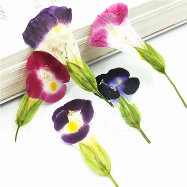 Petunia Hydrida Decorative Flowers Pressed Flower, 7 Different Styles Plant Specimens Material For DIY Home Ornament 120Pcs Free Shipment