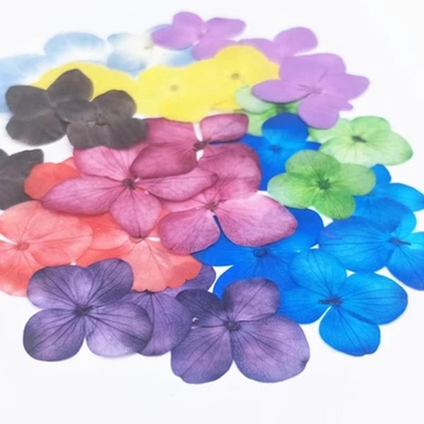 Hot Selling Hydrangea Real Pressed Flowers , 11 Different Colors Dried Flower Bookmark For Creative Gifts 100 Pcs Wholesales Free Shipment