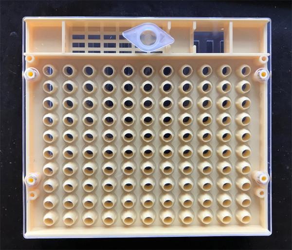 Cupularve Bee Box Haute Qualité En Plastique Apiculture Outils Avec Rectangle Roi Abeilles Ruches Élévation Cupkit Jardin Fournitures 20zx jj