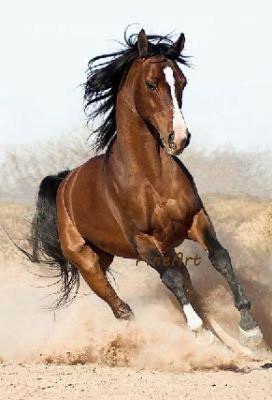 cheval fait main peinture sur toile mur art animal toile art moderne huile tenture décoration maison décor présent