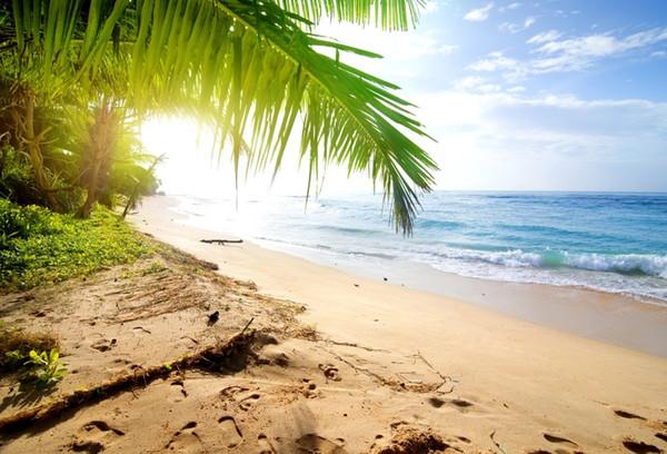 Laeacco Deniz Plaj Tropikal Palmiye Ağacı Mavi Gökyüzü Scenic Fotoğraf Arka Fotoğraf Stüdyosu Için Özel Fotografik Arka Planında