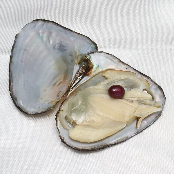 top popular Wholesale Oysters With Dyed Natural Pearls Inside Pearl Party Oysters In Bulk Open At Home Pearl Oysters With Vacuum Packaging 2020