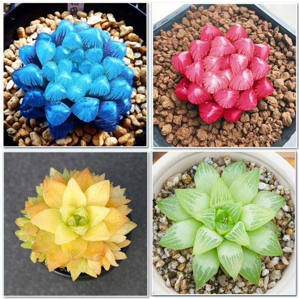 50 pcs/bag Yulu succulent seeds beautiful Lotus Lithops Pseudotruncatella pot flower Extremely fleshy bonsai garden plant