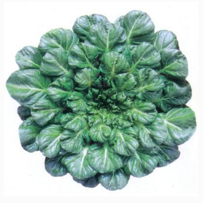 Wuta-tsai Chinese Black Vegetables Seeds Heirloom Green Vegetables 100 particles/bag