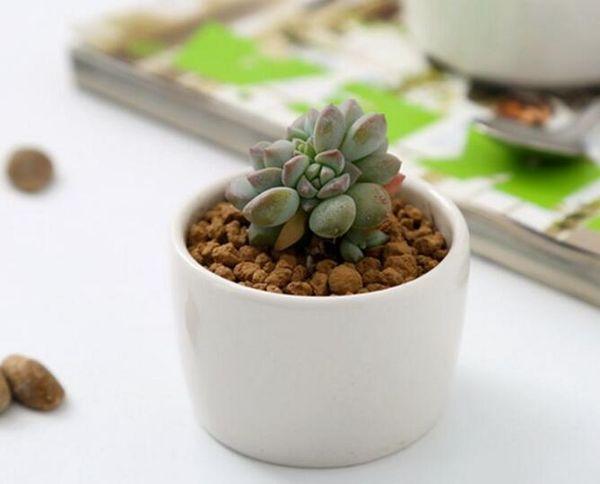 240pcs ceramic bonsai pots wholesale mini white porcelain flowerpots suppliers for seeding succulent indoor home Nursery planters