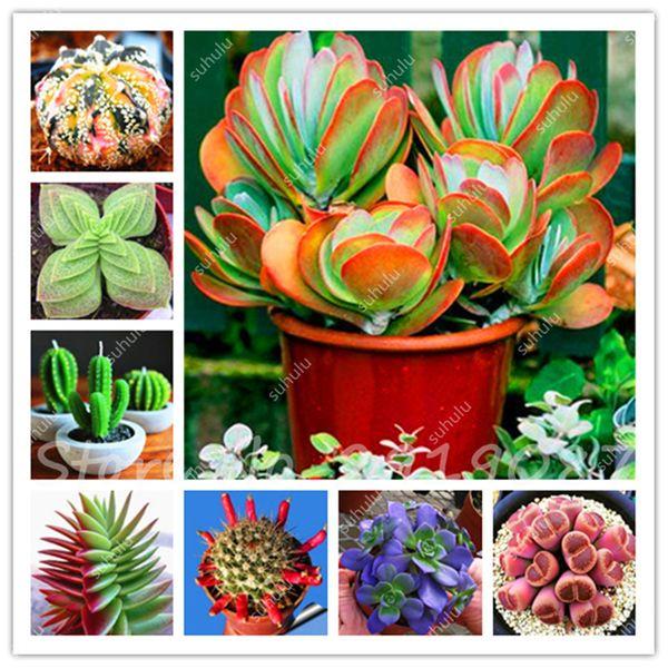 Semillas De Flores 200 Pcslithops Seed Pseudotruncatella Succulents Raw Stone Cactus Seeds Stems Tetragonia Potted Flower Fleshy