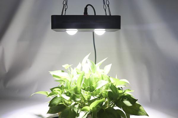 2019 Venta al por mayor COB Led Grow Light COB 100W Full Spectrum Led Grow Light con precio competitivo