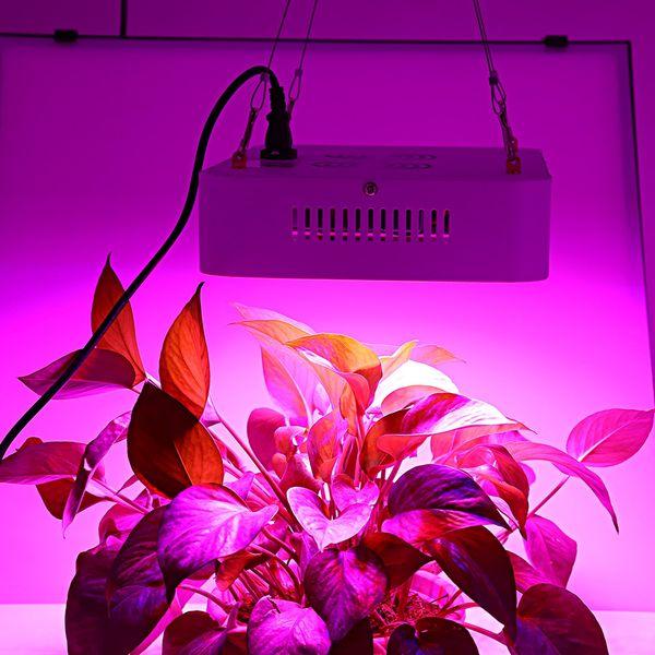 LightMe 120 LEDs de Poupança de Energia Crescer Lâmpadas 600 W Verdadeiro 220 W LED Planta Crescer Luz Em Forma de Painel Quadrado Full Spectrum Lâmpada AC 85-265 V