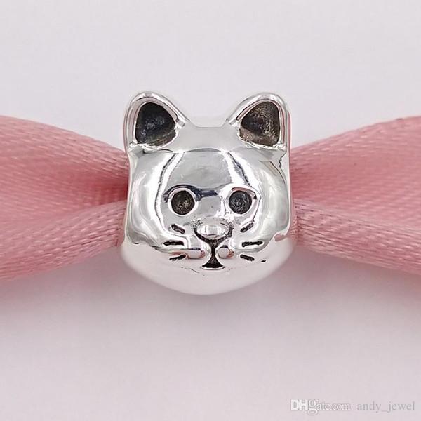 pandora gattino curioso