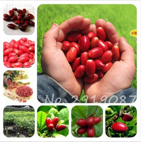 Free Shipping New 20 Pcs Tropical Miraculin Fruit Seed Anacardium Occidentale Plant Tree Pot Plant Gardens Miracle Fruit Vegetables