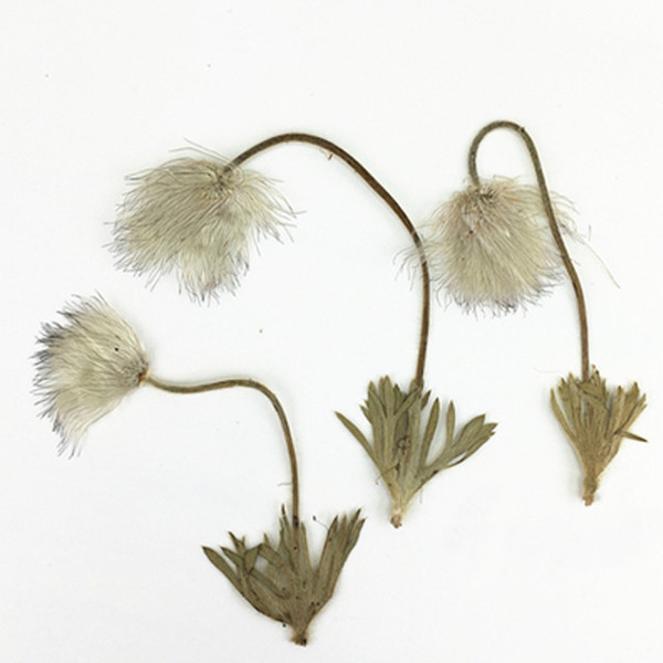 Hot Wild Grass Teach Specimen Leaves Dried Flower, True Plant Specimens Crafts For Candle Beauty Ornaments Free Shipment 60 Pcs