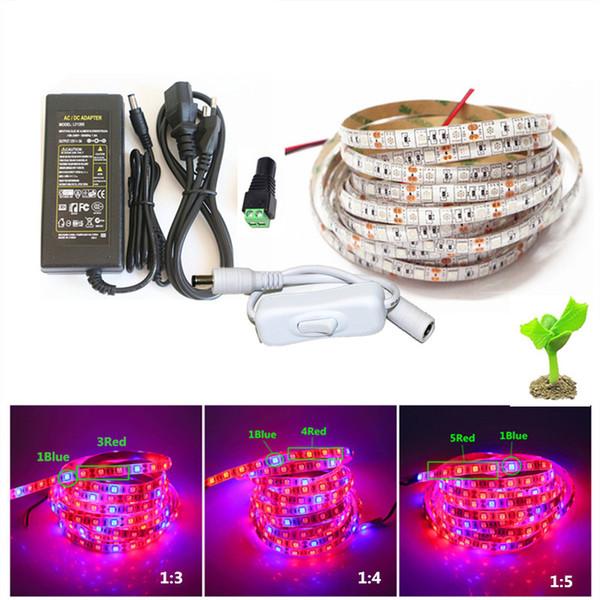 5M 5050 LED Grow Lights DC 12V a prueba de agua Crecimiento de tira de luces LED Crecimiento de la luz Juego de luces con adaptador e interruptor para la planta de invernadero