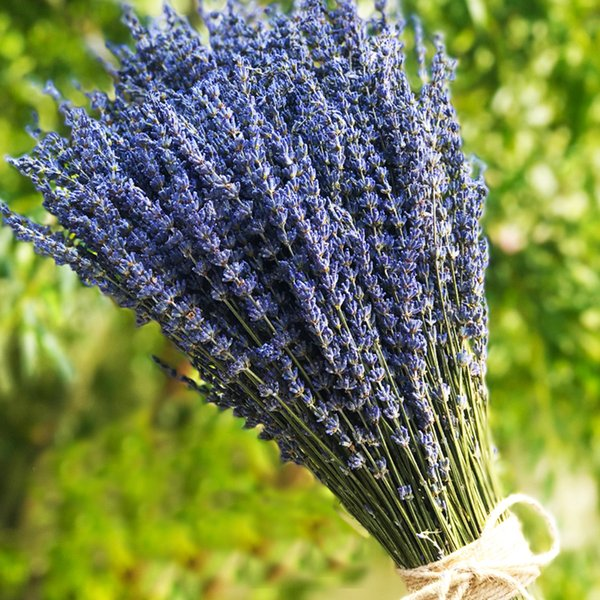 Ultra Blue Lavender Bundles Flower Bouquets for Home Decor, Crafts, Gift,Wedding or Any Occasion