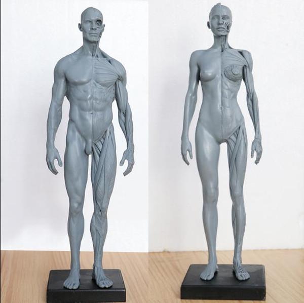 Satin Al Insan Kas Iskelet Sistemi Ile Anatomi Modeli Boyama Sanat
