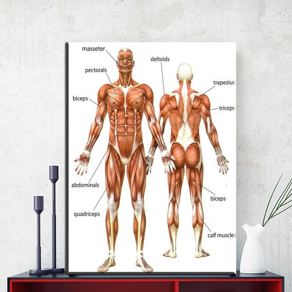 1 Panel Canvas Painting Wall Art Picture Human Anatomy Muscles System Art Canvas Poster Print Body Pictures for Medical Education No Frame