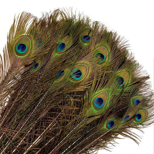Decorative Peacock Feather Elegant materials Real Natural Beautiful Feathers about 25 to 30 cm