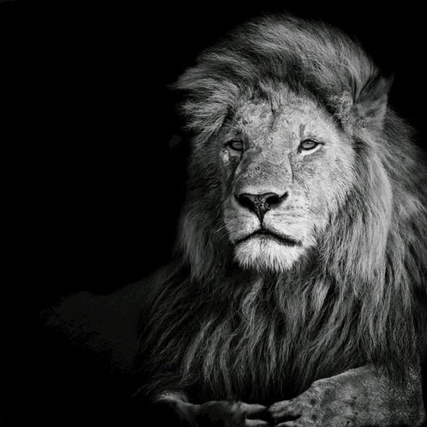 Алмаз живопись 5D полный квадратный Тигр вышивка зверь животных горный хрусталь вышивки крестом главная гостиная картины Home Decor