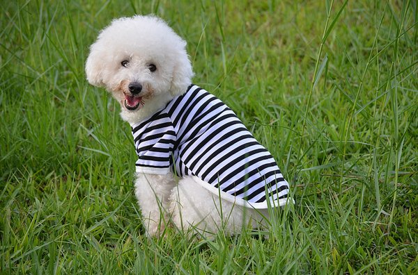 Spring and summer pets apparel No collar dog striped T-shirt Comfortable Breathable Dog Polo Shirt free shipping