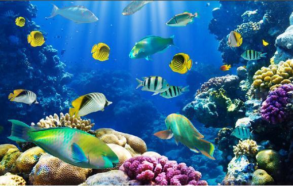 Compre Mundo Submarino Peces Tropicales Fotografía Tv Fondo Pared Mural Foto Fondo De Pantalla A 4021 Del Dhzhang20188 Dhgatecom