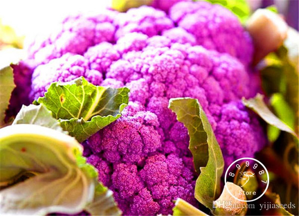 purple broccoli Cauliflower seeds high-quality organic vegetable seeds for home garden 30 pcs/bag Free shipping