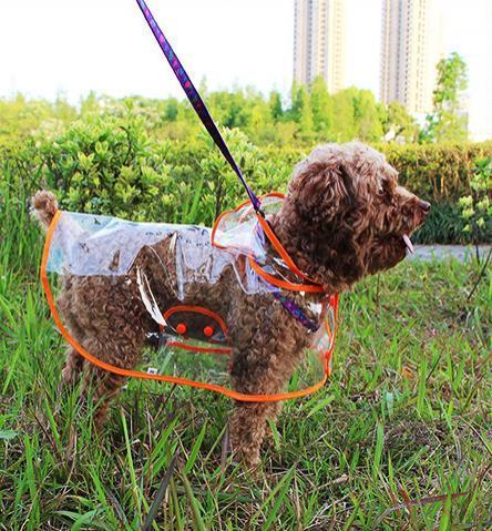 Dog transparent waterproof raincoat Dog Outdoor Hooded rain jacket Clothing Rainwear 4color S/M/L/XL