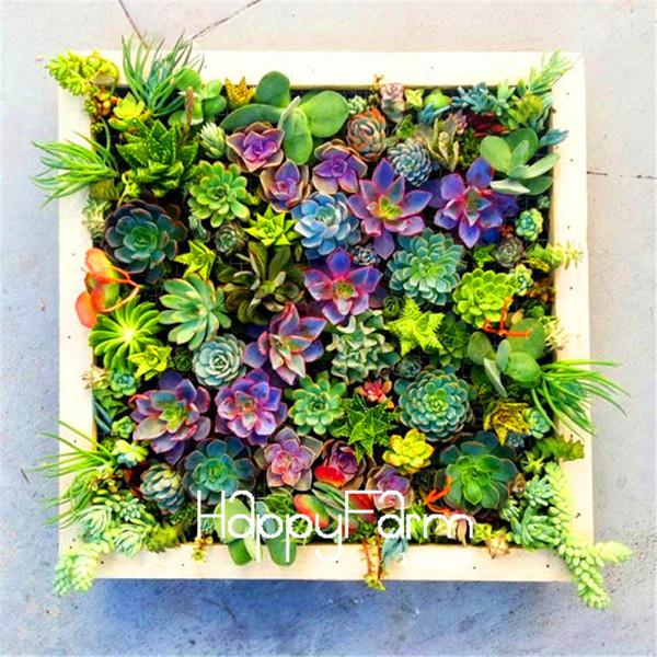 100 pièces / sac Meilleures ventes! Graines de cactus succulentes Lotus Lithops Bonsaïs Plantes Accueil Jardinage Pots de fleurs Graines de fleurs pour balcon
