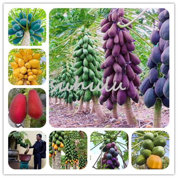 Atacado-20 Pçs / saco Anão Hovey Sementes de Papaia Bonsai Orgânico Mamão Sementes De Árvores De Frutas Raro Delicioso Fruto Planta Em Vasos Para Casa jardim