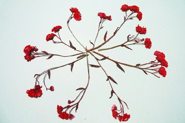 10pcs Red Daisy With Branches Pressed Flower Dried Flower Natural Flowers Diy Materials Sale Thanksgiving Decorative