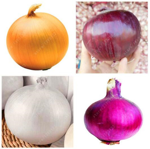 vegetable spring onion red onion seeds home to plant cultivation 100pcs FB