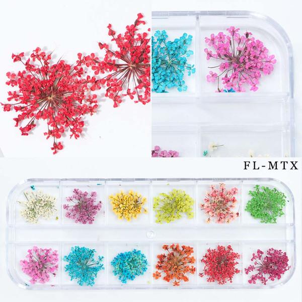 FL-MTX