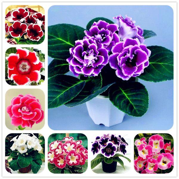 100 pcs/bag gloxinia seeds, sinningia gloxinia plant, bonsai flower seeds, balcony potted plant for home garden