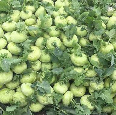 Kohlrabi seed, Brassica oleracea seed, planting vegetables 10 particles/bag