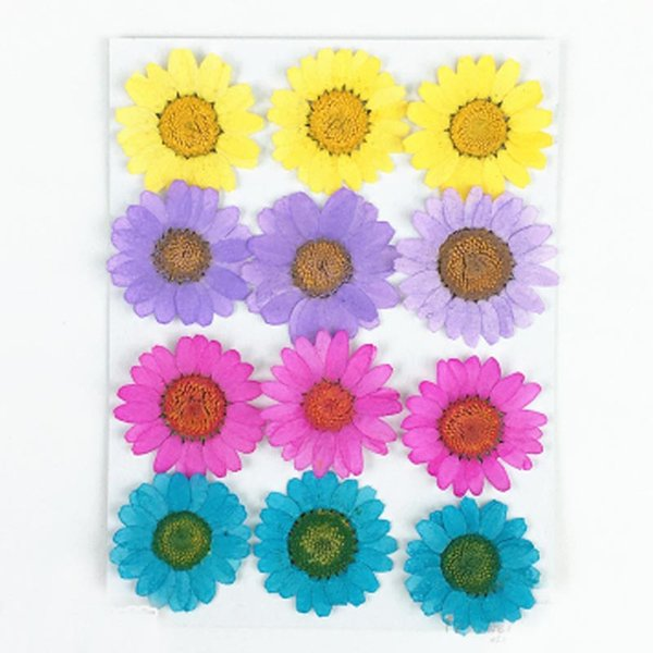 2018 Regenerated Flowers Chrysanthemum crystal Some Colors Pressed Flower Raw Material Specimens For Holidays DIY Bookmark Home Onament