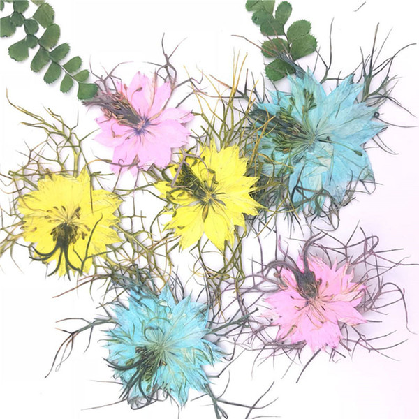 2019 Love in a Mist Dried Pressed Flower Arrangements 8 Different Colors For Kids Handcrafts Gifts 60 Pcs Free Shipment
