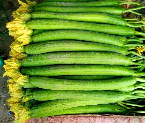 Free Shipping 20 Big Loofah Sponge Gourd Seeds of Vegetables Luffa fibrous Showy Plant ,Homemade Soap,Backyard Tasty