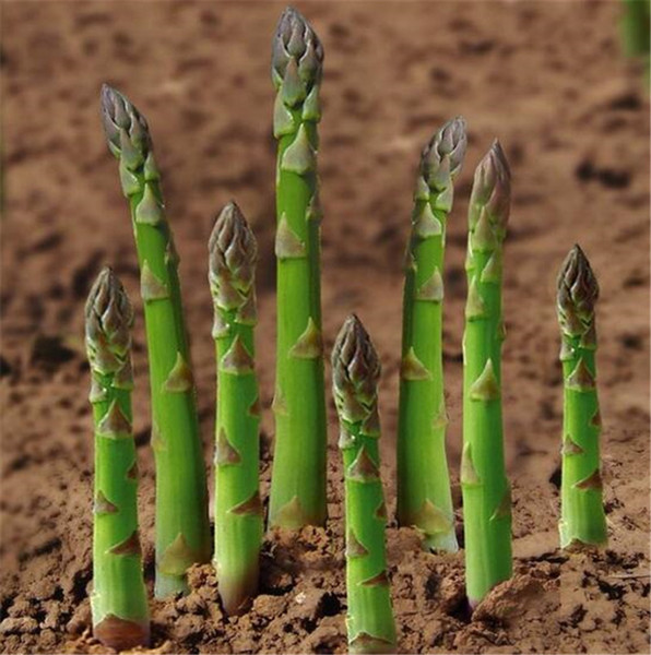 100 pcs Asparagus seeds lower blood pressur,Vegetable and fruit seeds,Bonsai plants Seeds for home & garden Free shipping
