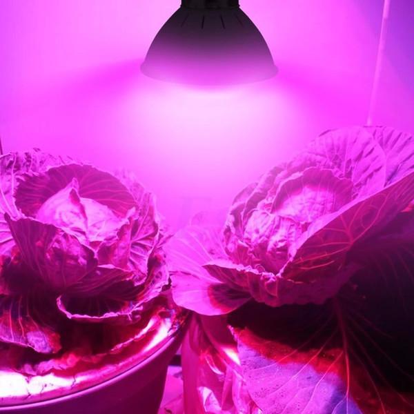 72 LED wachsen Glühlampe E27 5W 2835 SMD volles Spektrum-Gewächshaus-Wasserkultursystem Gemüse-Blumen-Betriebslampe wachsen Kasten AC110V / 220V